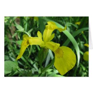 Blank_Yellow Tri-Iris Note Card