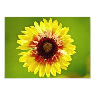 Blanket flower, gaillardia aristata  flowers custom invitations