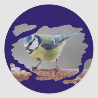 BLAUMEISE BLUETIT photo: Jean Louis Glineur Classic Round Sticker