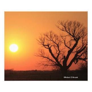 Blazing Orange Sunset Silhouette Photo Enlargement