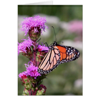 Blazing star and monarch butterfly card
