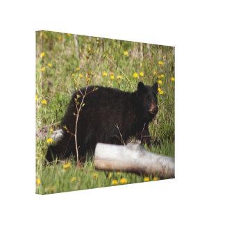 BLBC Black Bear Cub Canvas Prints
