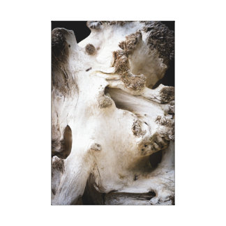 Bleached Tree Root Stump Beach Drift Wood Canvas Print