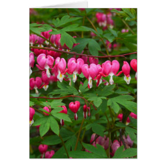 Bleeding Hearts Nature, Photo Card