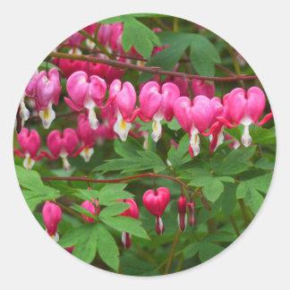 Bleeding Hearts Nature, Photo Classic Round Sticker