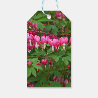 Bleeding Hearts Nature, Photo Gift Tags