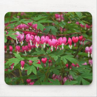 Bleeding Hearts Nature, Photo Mouse Pad