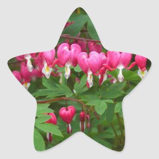 Bleeding Hearts Nature, Photo Star Sticker