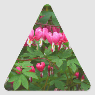 Bleeding Hearts Nature, Photo Triangle Sticker