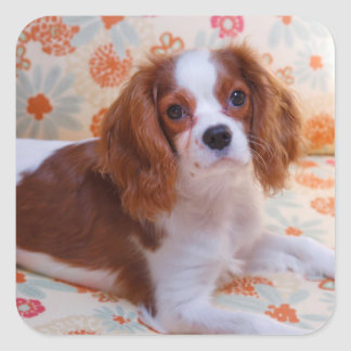 Blenheim Cavalier King Charles Spaniel Stickers