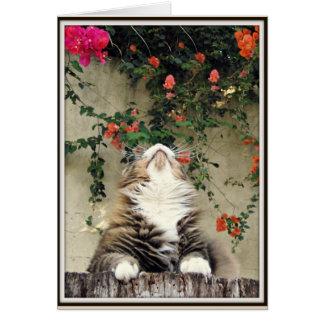 Blissful Cat Card