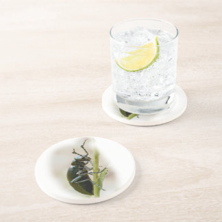 Blister Beetle - Meloidae Beverage Coaster