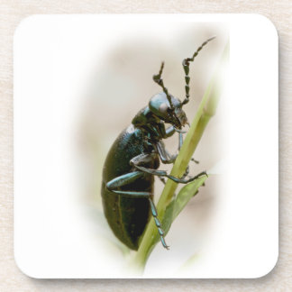 Blister Beetle - Meloidae Beverage Coasters