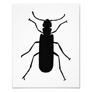 Blister Beetle Silhouette Photographic Print