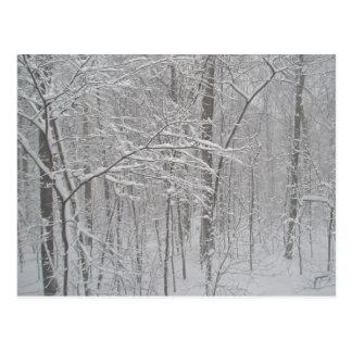 Blizzard in February 2010 Postcard