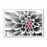 Blk & Wht/Pink Ribbon Postcard