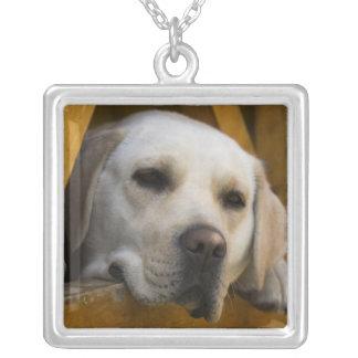 Blond Labrador retriever, Patagonia, Chile Square Pendant Necklace