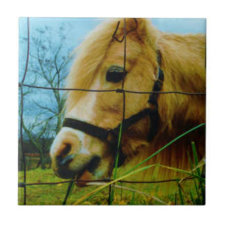 Blond Miniature Pony / Horse Blue Sky Small Square Tile