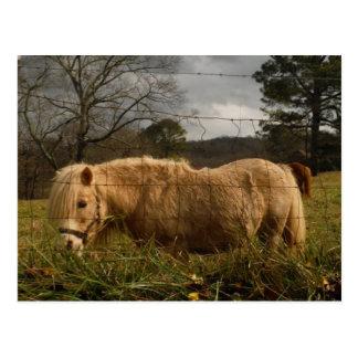Blond Miniature Pony Horse Postcard