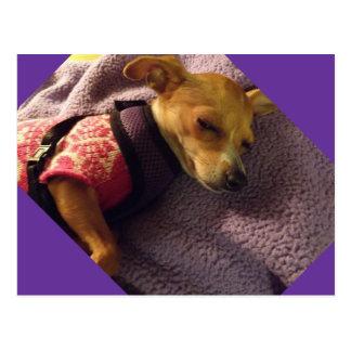 blonde Chihuahua card