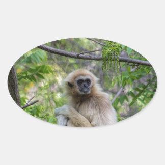 Blonde Gibbon Monkey - Hylobates lar Oval Sticker