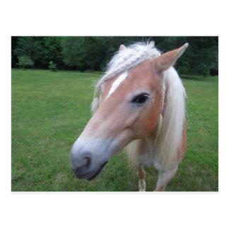 BLONDE HORSE POSTCARD