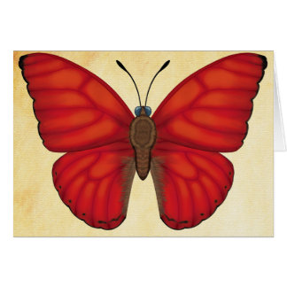 Blood Red Glider Butterfly Card