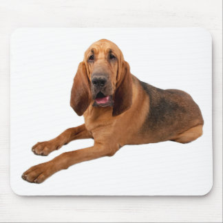 Bloodhound Puppy Dogs Rule Mousepad