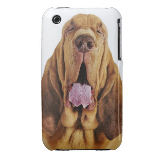 Bloodhound (St. Hubert Hound) with closed eyes, iPhone 3 Cases