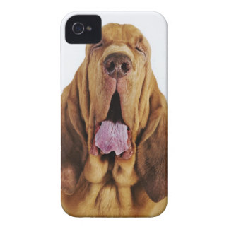 Bloodhound (St. Hubert Hound) with closed eyes, iPhone 4 Cover