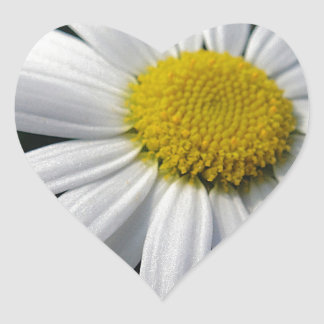 Bloom center white daisy heart sticker