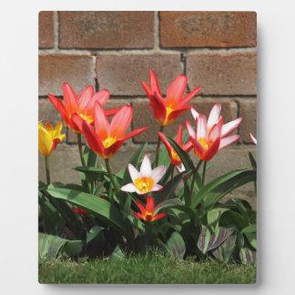 bloom plaque