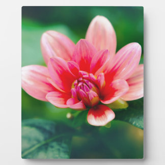 bloom plaques
