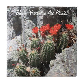 Bloom Where You Are Planted Ceramic Tile