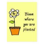 Bloom Where You Are Planted II Postcards