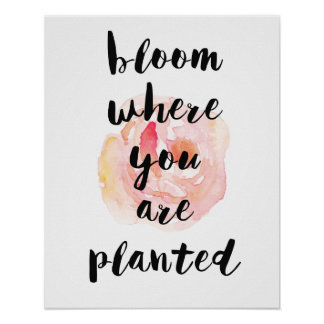 Bloom Where You Are Planted Watercolor Rose Poster