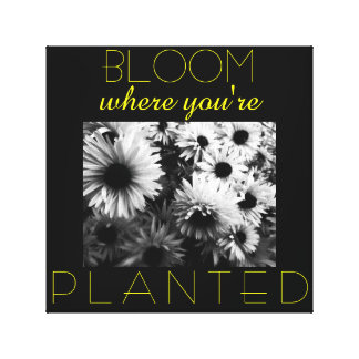 Bloom Where You re Planted Canvas Stretched Canvas Prints