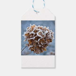 Bloom with ice crystals gift tags