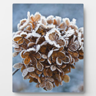 Bloom with ice crystals plaque