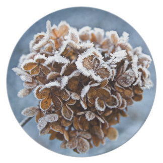 Bloom with ice crystals plate