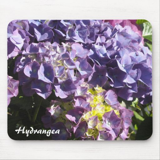 Bloomin' Hydrangea Mouse Pad