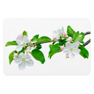 Blooming apple tree branch magnet