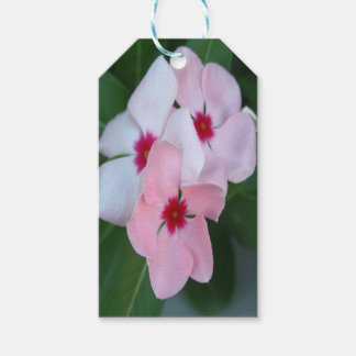 Blooming Beautiful Pink Impatiens Flowers Gift Tags