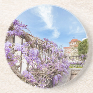 Blooming blue Wisteria sinensis on fence in Greece Coaster