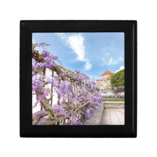 Blooming blue Wisteria sinensis on fence in Greece Gift Box