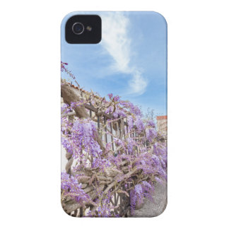 Blooming blue Wisteria sinensis on fence in Greece iPhone 4 Cover