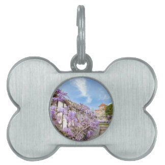 Blooming blue Wisteria sinensis on fence in Greece Pet Tag