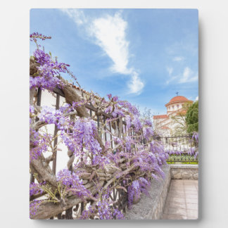 Blooming blue Wisteria sinensis on fence in Greece Plaque