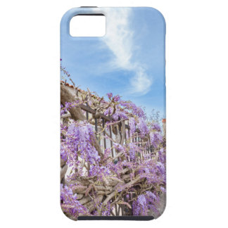 Blooming blue Wisteria sinensis on fence in Greece Tough iPhone 5 Case