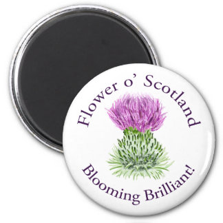 Blooming Brilliant Scottish Thistle Magnet
